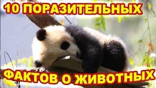 видео 10 интересных фактов о животных, которые вас удивят