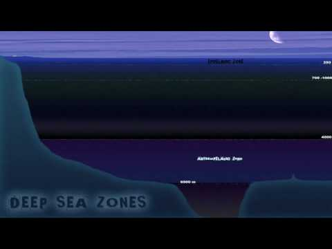 Deep Sea Terrain