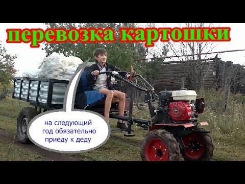 Перевозка картофеля на МОТОБЛОКЕ ОКА# [самодельная телега в работе]
