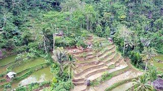 Satu Satunya Rumah Di Tengah Hutan Di Lereng Bukit    Kampung Bojong Campaka Sari Tasikmalaya