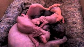 Кормящая мать 2