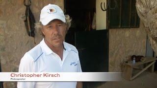 Engel & Völkers Polo Cup 2014 – werden auch Sie Teil des Polo Teams