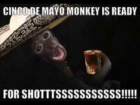 Cinco De Mayo Funny Quotes Pictures Sayings Facebook Status