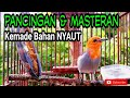 Ocehan Burung Kemade Gacor Masteran Kemade Bahan Pagi Hari Langsung Nyaut  Mp3 - Mp4 Download