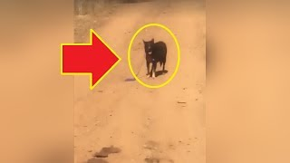 A Trucker Found A Dog Alone On A Remote Road  Then He Realized It Was In Desperate Need Of His Help