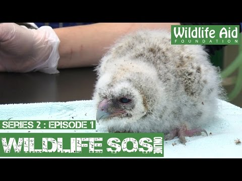 Wildlife SOS Online S2 - Episode 1: A Day in the Life
