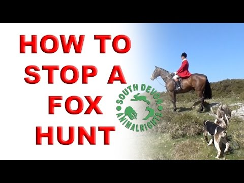 How To Stop A Fox Hunt