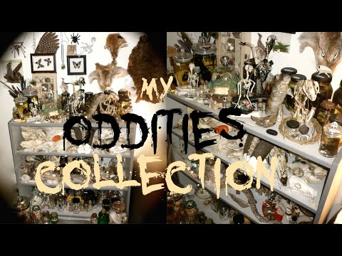 My Oddities Collection