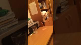 Кот по имени козел