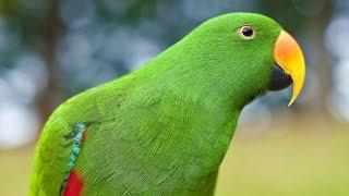 ► Попугай пришел домой! Смешное видео про папугая