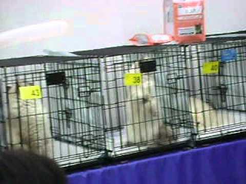 MOV09930.AVI 18.11.2012 Ижевск выставка кошек..
