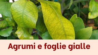 Download lagu Perchè gli agrumi fanno le foglie gialle? - AGRUMI LENZI