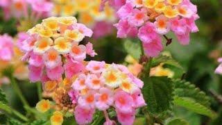7 Plantas de Flores Lindas e Fáceis de Cuidar Para Você ter em Sua Casa E Colorir o Seu Jardim