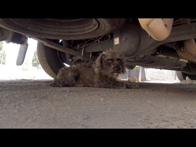 when-rescuers-found-her-she-cowered-under-a-truck-then-they-realized-the-secret-she-was-guarding