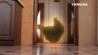 Черная курица | Реальная мистика