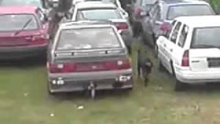 2 Turkish Kangal Vs German Rottweiler   Youtube