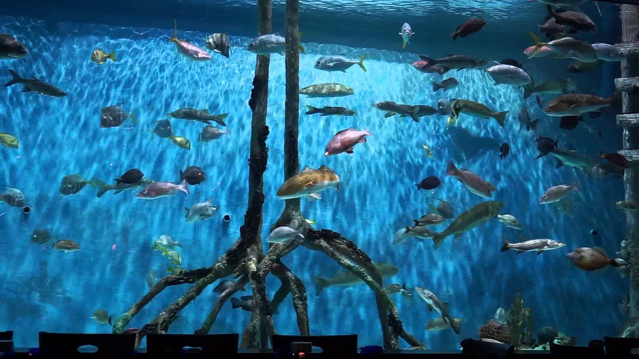 The Aquarium At Rumfish Grill Guy Harvey S Outpost St Pete Beach Fl