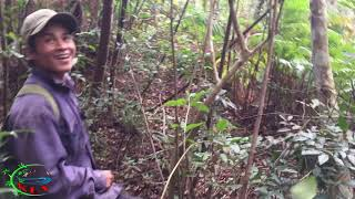Thăm bẫy heo rừng/Vào rừng tìm heo rừng/KLVvlog