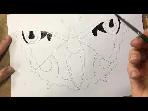 Вопрос: Бабочка Павлиний глаз. Как выглядит, чем питается, описание, фото?