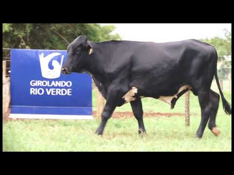 LOTE 214 INDIANO CALÍGULA IFC