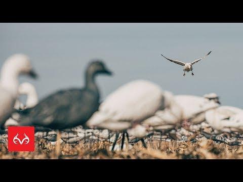 Waterfowl Hunting Tip   Traffic Hunting