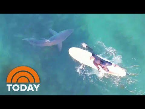 See Great White Sharks Swim Near Surfers