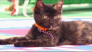 Cat-lete of the Week - Marbles - Episode 6 thumbnail