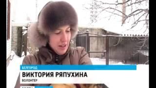 Мерзнут лапы, уши и хвост   ГТРК «Белгород»  Филиал ФГУП ВГ