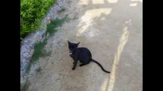 Кошки египта