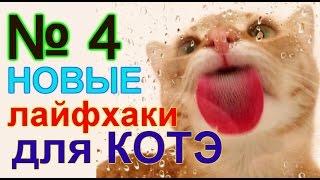 лайфхаки для кота 4