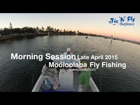 Morning Fish