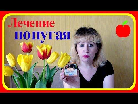 Лечение попугая от клеща//Болезни попугаев//Лекарства от клеща//Наросты