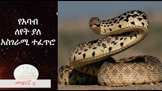 Amaizing nature of snake, EthiopikaLink
