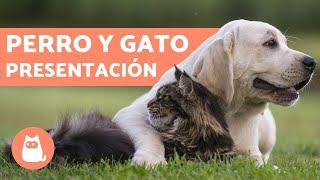 Cómo Presentar Un Perro Y Un Gato Consíguelo En 5 Pasos Youtube