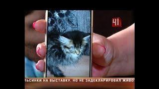 Котята мейн-куны умерли