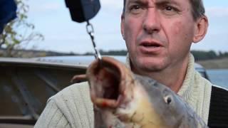 Рыбалка Сазан на 13.5 кг. г. Харцызск Донецкая обл. р.Крынка (Гедра)