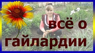 видео Цветы гайлардия многолетняя: фото, выращивание из семян, посадка и уход