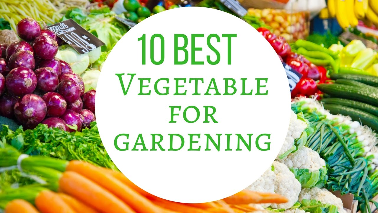 Growing Vegetables In Pots For Beginners   10 Best Vegetables For Container  Gardening