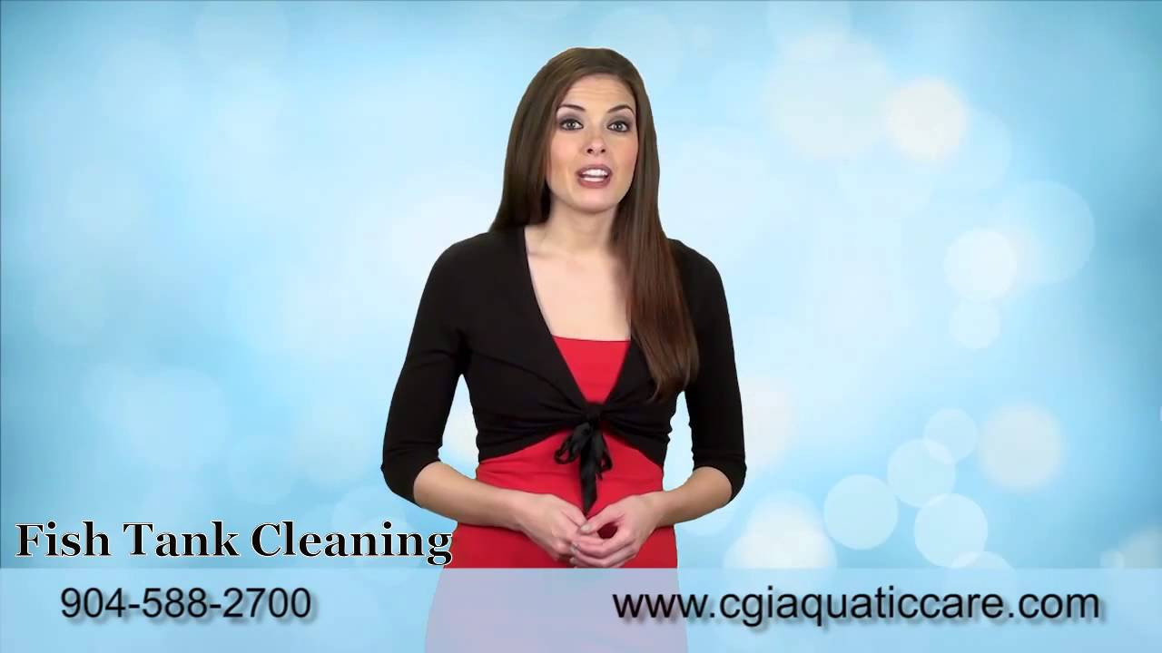 Fish tank cleaning service - Aquatic Care Fish Tank Cleaning Service 904 588 2700 Jacksonville Fl