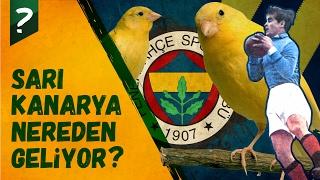 Fenerbahçe'nin Sarı Kanaryası Nereden Geliyor?