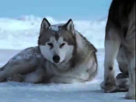 eight below maya hello youtube