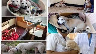 Animal Welfare Organization - CARE