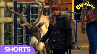 My Pet and Me: Walking with Reindeers - CBeebies