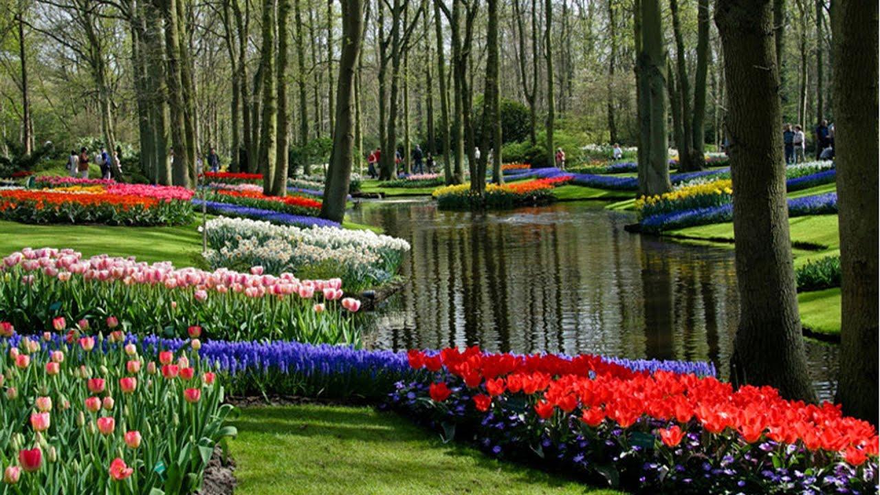 MUNDO MARAVILHOSO / WONDERFUL WORLD - ASHIKAGA FLOWER PARK ...