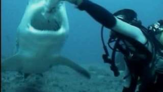 Dive with the Bull Sharks Santa Lucia Cuba