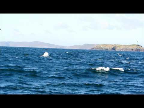 Best whale watching in West Cork, Ireland - Baltimore Sea Safari