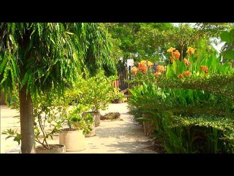 Our Garden in Laos - May 2017