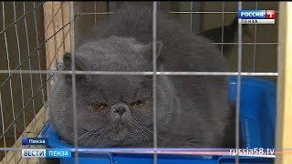 В Пензе гостят кошки по цене автомобиля