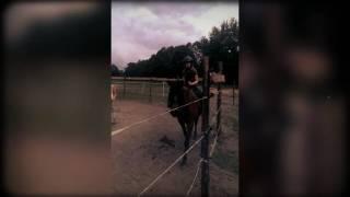 Konie...moja pasja - Agroturystyka