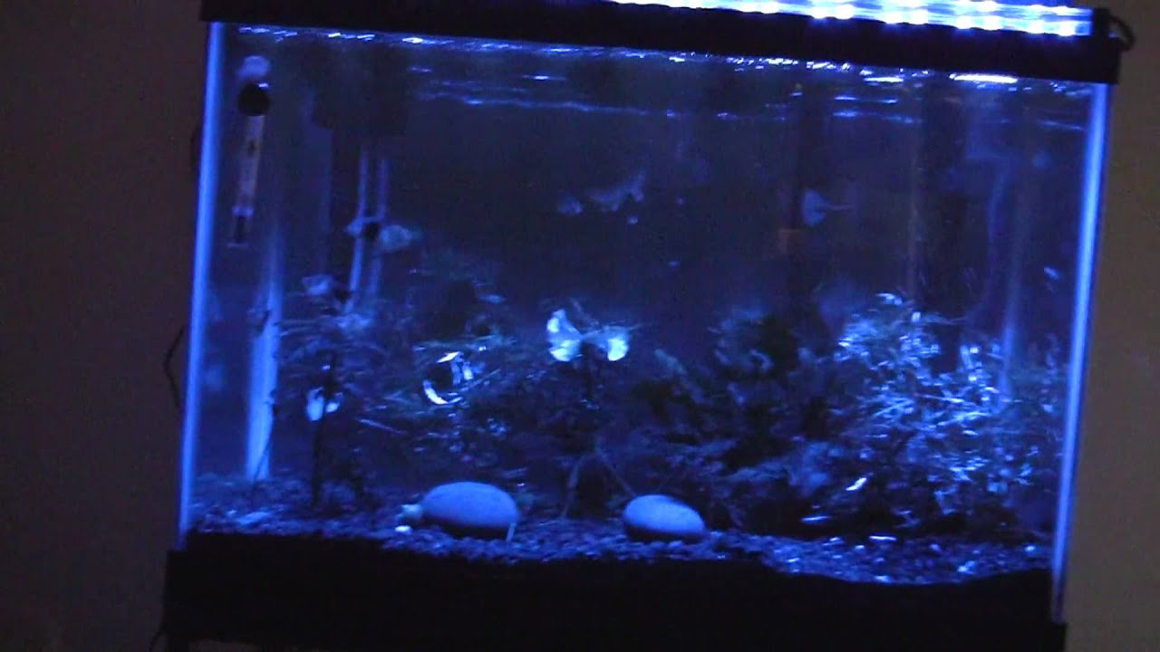 aquarium moonlight led lights youtube. Black Bedroom Furniture Sets. Home Design Ideas